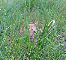 Tiger in the Grass by Susan S. Kline