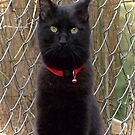 Portrait of a Black Cat by Terri Chandler