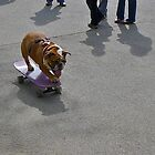 Skateboarding Bulldog by cammisacam