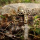 Mushroom by Ginger  Barritt