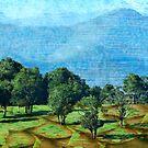 My Country - Dorrigo, NSW by Clare Colins