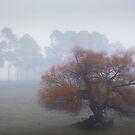 Foggy Morning by KateJasmine