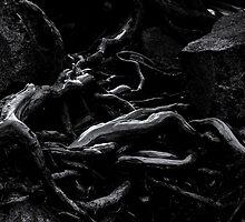Roots by Jeffrey  Sinnock