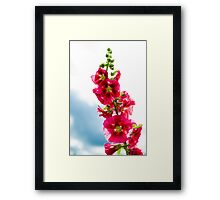 Red Hollyhock Framed Print