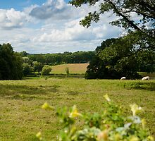 English Country Landscape by mlphoto