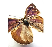Butterfly 10 Photographic Print