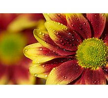 Floral Macro Photographic Print