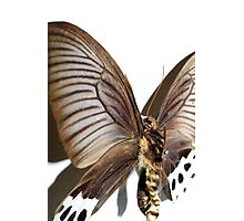 Butterfly 11 Photographic Print