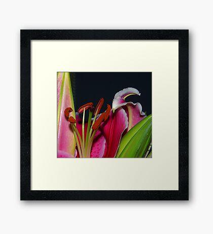 Tiger Lilly.. Framed Print