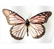 Butterfly 15 Poster