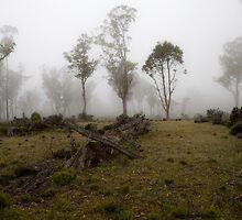 Morning Winter Mist by Steve Bass