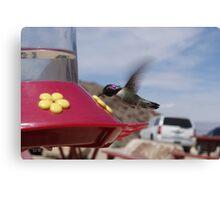 Hummingbird Photographs Canvas Print