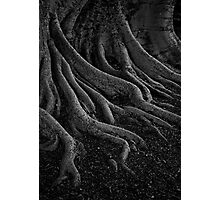 entrenched Photographic Print
