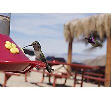 Hummingbird Photographs Photographic Print
