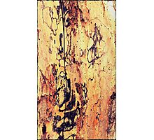 Wood Texture with a Crack Photographic Print