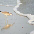 Shore Bird by Laurel Talabere