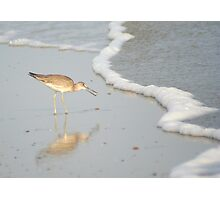 Shore Bird Photographic Print