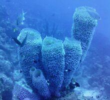 Sponge by emilyduwan