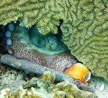 Hidden Octopus  by emilyduwan