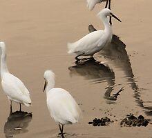 Herons on Lake Merritt by olivia destandau