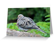 Turtle Dove Greeting Card