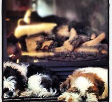 Let sleeping dogs lye. 2013 by CrystalPlummer