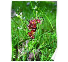 Wild Weeds Poster