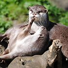 Playful Otters. by Dorothy Thomson
