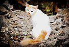 Mystic Spy Cat II by tropicalsamuelv