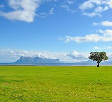 Lonely tree by DmiSmiPhoto