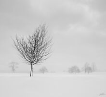 Standing Proud by redtree