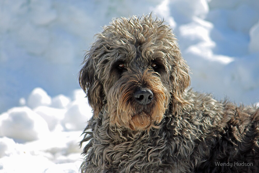 There is a Dog under that fur. by Wendy Hudson