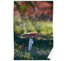 Fly agaric - Mt Wilson Poster
