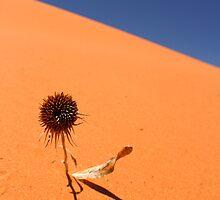 Sand, Sky and Sunflower by WhiteLightPhoto