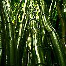 Bamboo Forest, Hana, Maui, HI by WhiteLightPhoto