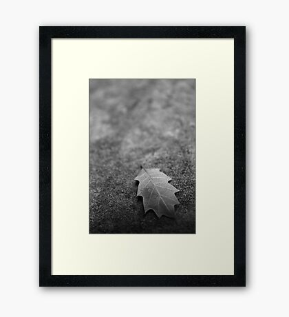 Leaf on Rock Framed Print