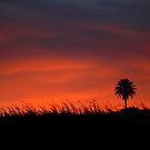 Sunset Silhouette Hana, Maui, HI by WhiteLightPhoto