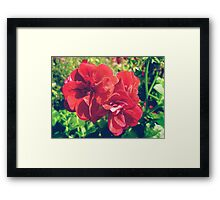 Red geranium flowers Framed Print
