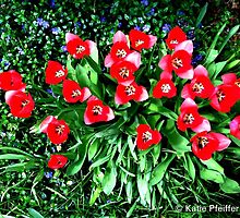 Spring Flowers, Mainline, PA by Kater