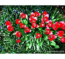 Spring Flowers, Mainline, PA Photographic Print