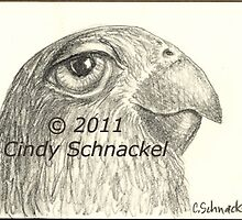 Parrot pencil sketch by Cindy Schnackel