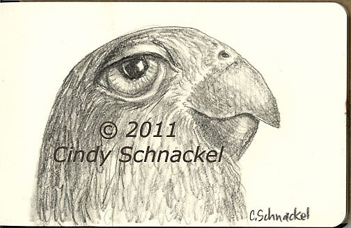 Parrot pencil sketch by © Cindy Schnackel