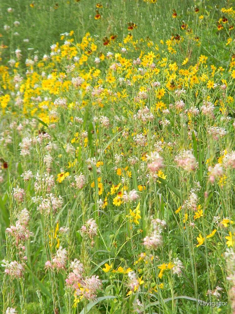 Wildflower Medley by Navigator