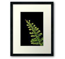 Fern, Fern, Asparagus Fern Framed Print