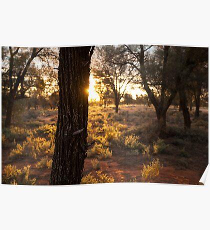 Sunset over desert landscape Poster