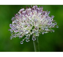 H20 Macro - Misty Rain Drops Photographic Print