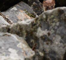 Watcher in the Rocks Sticker