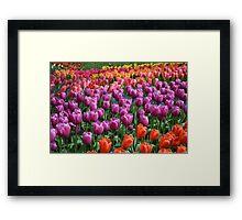 Tulip Fields 1 Framed Print