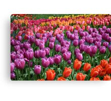 Tulip Fields 1 Canvas Print
