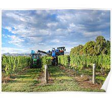 Grape Harvest Marlborough Poster